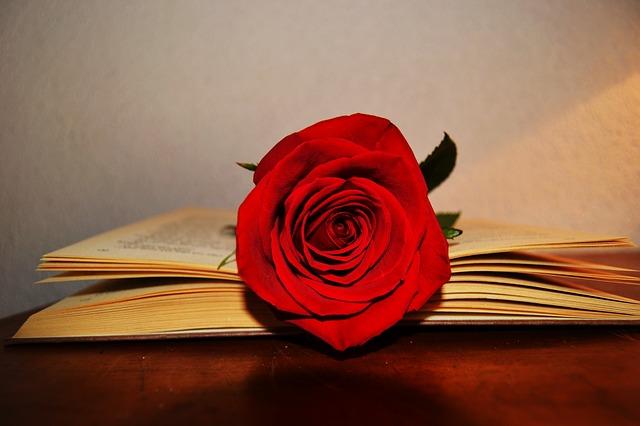 Sant Jordi: rosa y libro
